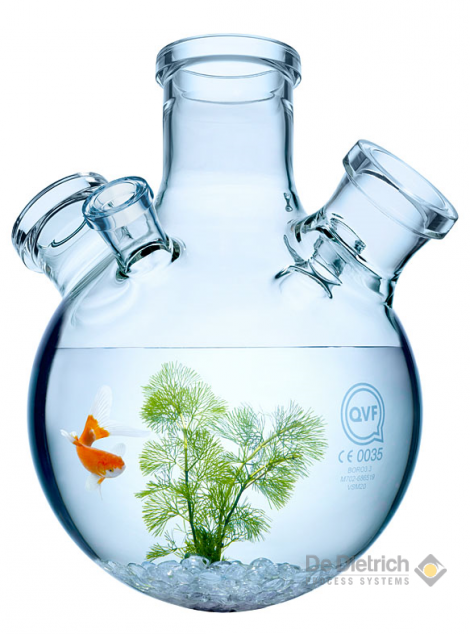 Goldfish glass